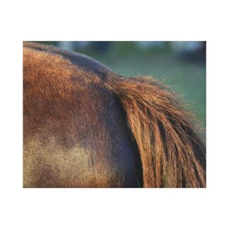 design animal eqüino do flanco marrom da cauda de impressão de canvas esticada