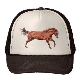 Design de galope do cavalo da égua do líder da boné