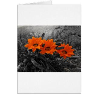 Design floral da fotografia da flor alaranjada & cartão comemorativo