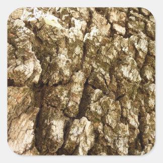 Design Textured do latido de árvore II abstrato Adesivo Quadrado