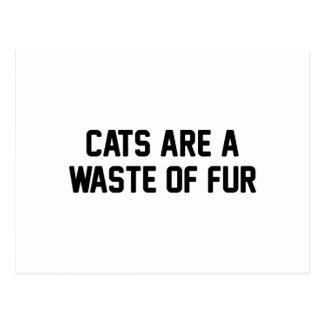 Desperdício dos gatos da pele cartão postal