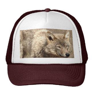 Destino dos lobos do parque natural do amor da paz boné