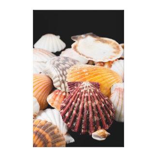 Detalhe de Seashells de todo o mundo Impressão Em Tela