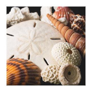 Detalhe dos Seashells de todo o mundo 2 Impressão De Canvas Envolvida