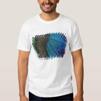 Detalhe masculino da pena do pavão camiseta