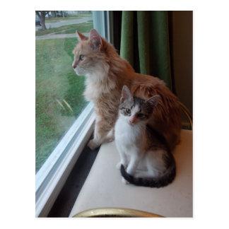Dia bonito na janela cartão postal