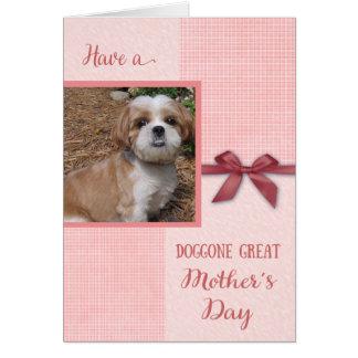 Dia das mães, Doggone boa mamã, cartão com fotos