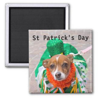 Dia de São Patrício, um cão no verde, Scotland Ímã Quadrado
