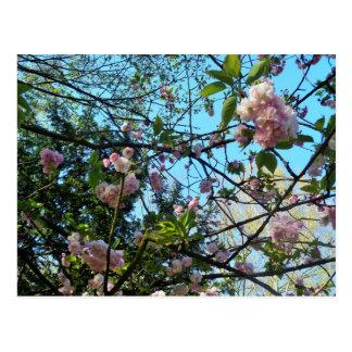 Dia feliz de Mother´s, flor de cerejeira Cartão Postal