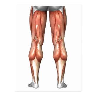 Diagrama que ilustra grupos do músculo do pé cartão postal