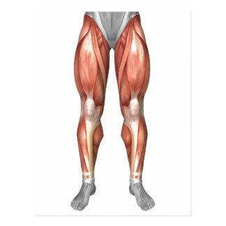 Diagrama que ilustra grupos do músculo na parte cartão postal