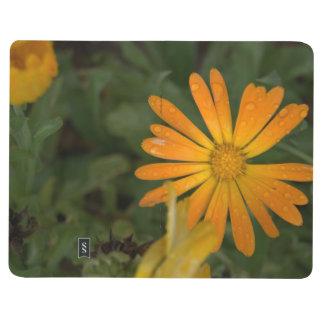 Diário A flor alaranjada