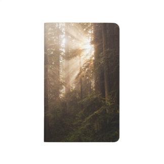 Diário Árvores da sequóia vermelha na névoa da manhã com
