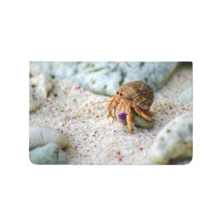 Diário Caranguejo da areia, Curaçau, ilhas das Caraíbas,