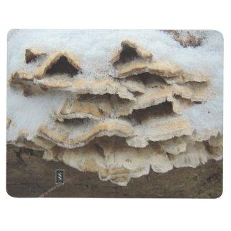 Diário Cogumelos no inverno