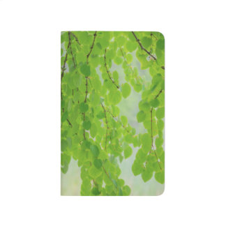 Diário Membros de árvore de Katsura na primavera |