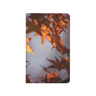 Diário País das maravilhas da queda da cor do outono