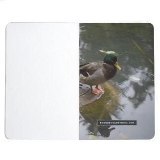 Diário Pato em uma lagoa
