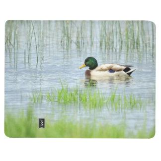 Diário Pato masculino do pato selvagem que flutua na água
