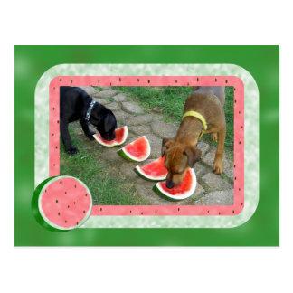 Dias de cão do verão cartão postal