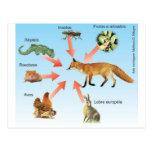 dietaraposa11 esquema didático dieta da raposa cartões postais