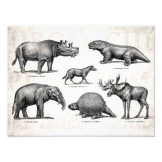 Dinossauros retros da ilustração velha do dinossau impressão de foto