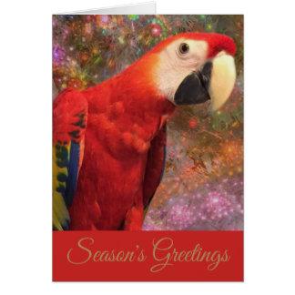 Do Macaw do papagaio escarlate vermelho do cartão