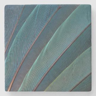 Do macaw escarlate da pena do papagaio porta-copos de pedra