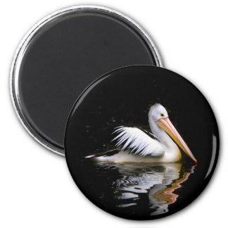 ~ do PELECANUS CONSPICILLATUS (pelicano Imas