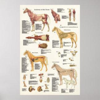 Do poster eqüino da anatomia do cavalo grande