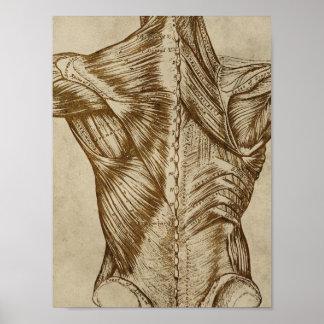 Do poster traseiro da anatomia do vintage