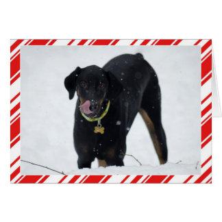 Doberman bonito no cartão do feriado da neve