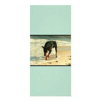 Doberman na imagem da pintura da praia 10.16 x 22.86cm panfleto