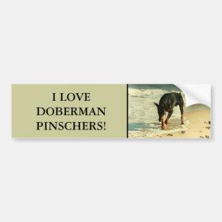 Doberman na imagem da pintura da praia adesivo