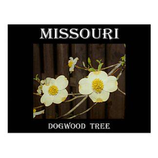 Dogwood de Missouri Cartão Postal