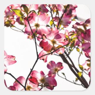 Dogwood na flor adesivo quadrado