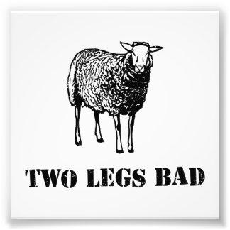 Dois carneiros do mau dos pés impressão fotográfica