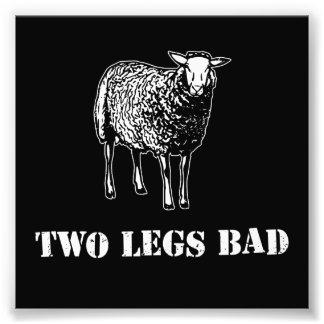 Dois carneiros do mau dos pés impressão de foto