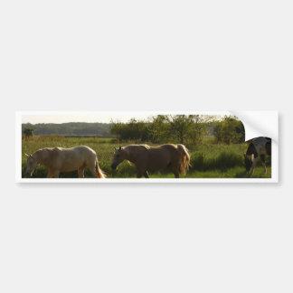 Dois cavalos no campo aberto adesivo para carro