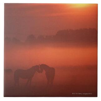 Dois cavalos no por do sol azulejo quadrado grande