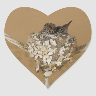 Dois colibris em uma etiqueta do ninho