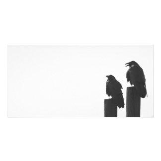 Dois corvos em cargos cartão com foto