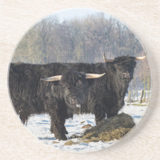 Dois escoceses escoceses pretos na neve do inverno porta-copos de arenito