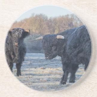 Dois escoceses escoceses pretos no prado congelado porta-copos