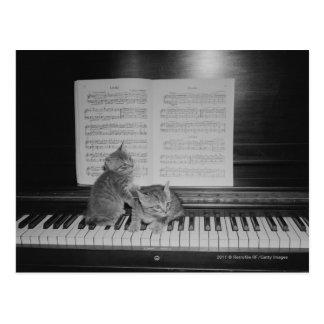 Dois gatinhos que sentam-se no teclado de piano pe cartão postal