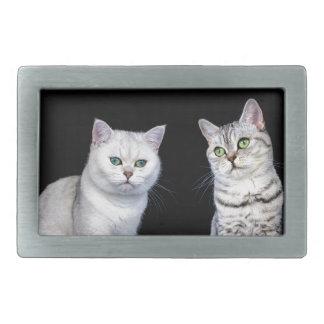 Dois gatos britânicos do cabelo curto no fundo
