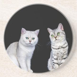 Dois gatos britânicos do cabelo curto no fundo porta-copos de arenito