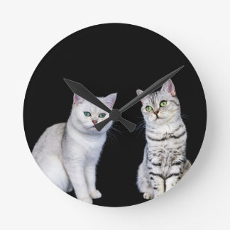 Dois gatos britânicos do cabelo curto no fundo relógio redondo