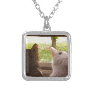Dois gatos de BFF que olham fora da janela Colar Com Pendente Quadrado