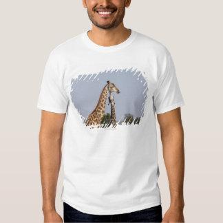 Dois girafa, parque nacional de Kruger, África do Tshirts